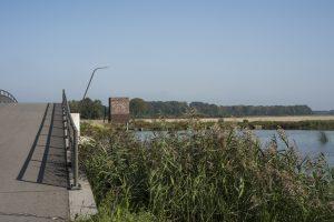 Fietsen in de Biesbosch